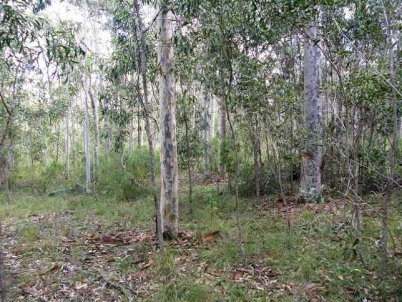 501 Coaldale Road, Fortis Creek, NSW 2460