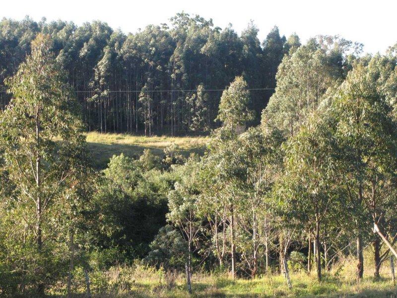 - Harlow, Hogarth Range, NSW 2469