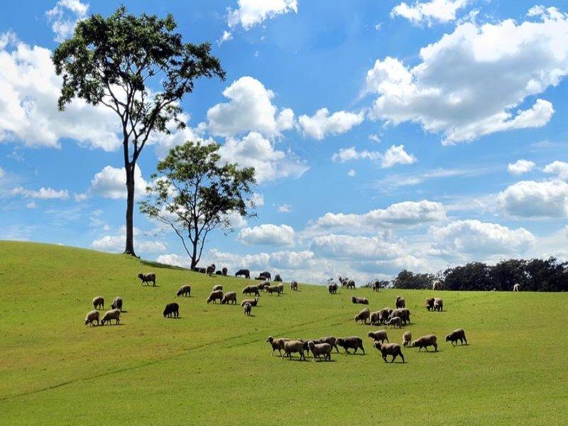 102 Mellows Road, Calderwood, NSW 2527