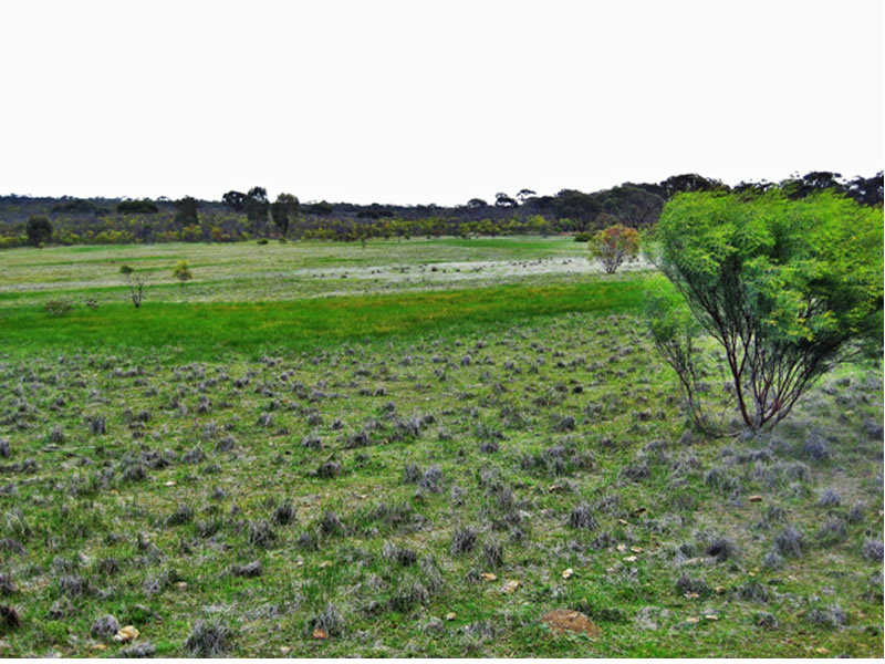 Lot 1 Wedderburn-Wychitella Road, Buckrabanyule, Vic 3525