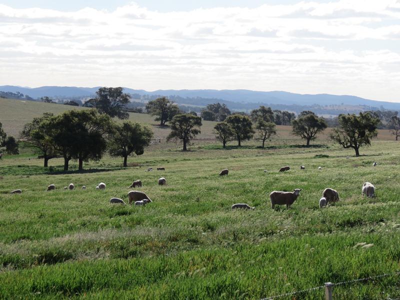 Spring Valley 585 Cooks Lane, Wellington, NSW 2820