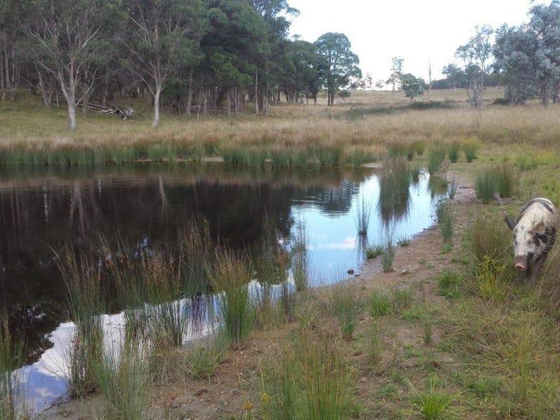 500 Dyamberin Road, Wongwibinda, NSW 2350