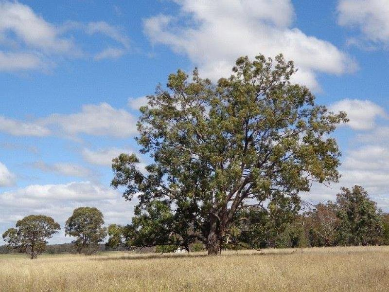 1435 Warrumbungle Way, Coolah, NSW 2843