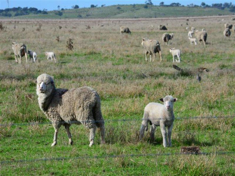 Sec 79, 80, 81 84 & 86 Dairy Range Rd, Mount Benson, SA 5275