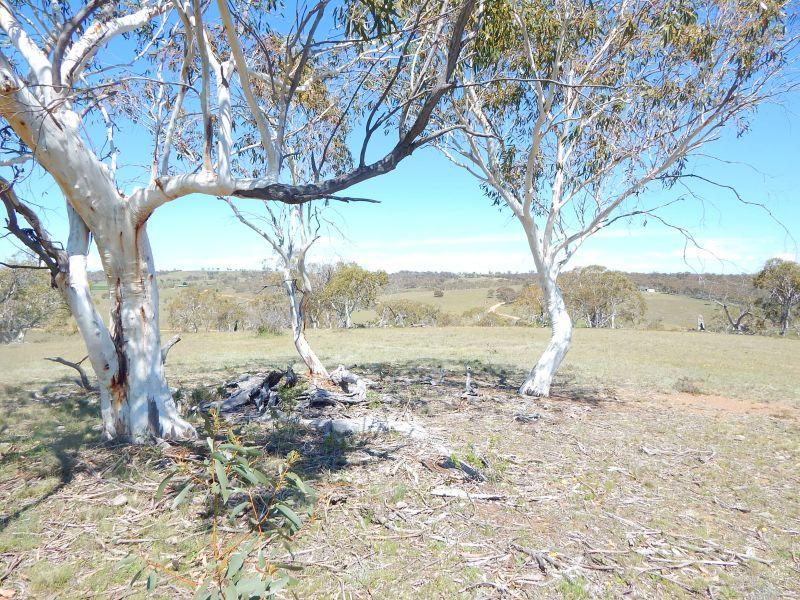 Lot 242, Dry Plains Road, Dry Plain, NSW 2630
