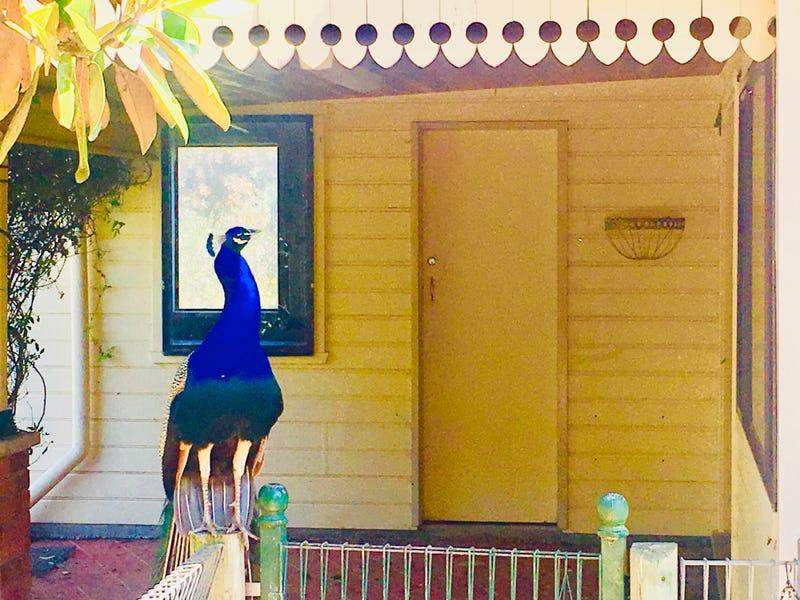 3572 Wingham Road, Comboyne, NSW 2429