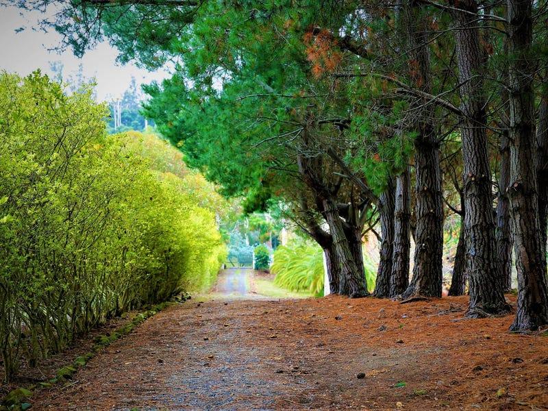 17A Atkinsons Road, Grindelwald, Tas 7277