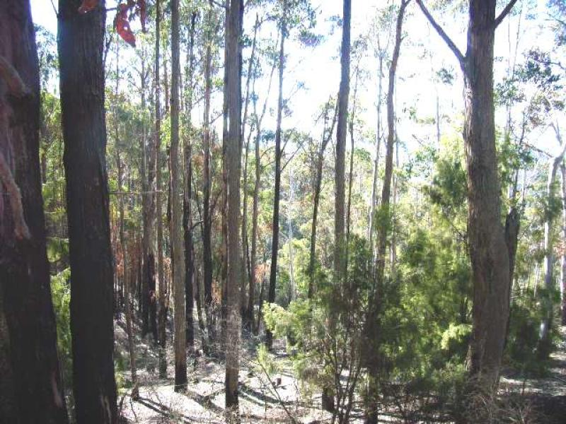 Lot 1 Mount Lloyd Road, Mount Lloyd, Tas 7140
