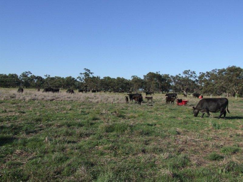 'ALGUDGERIE', Jerilderie, NSW 2716