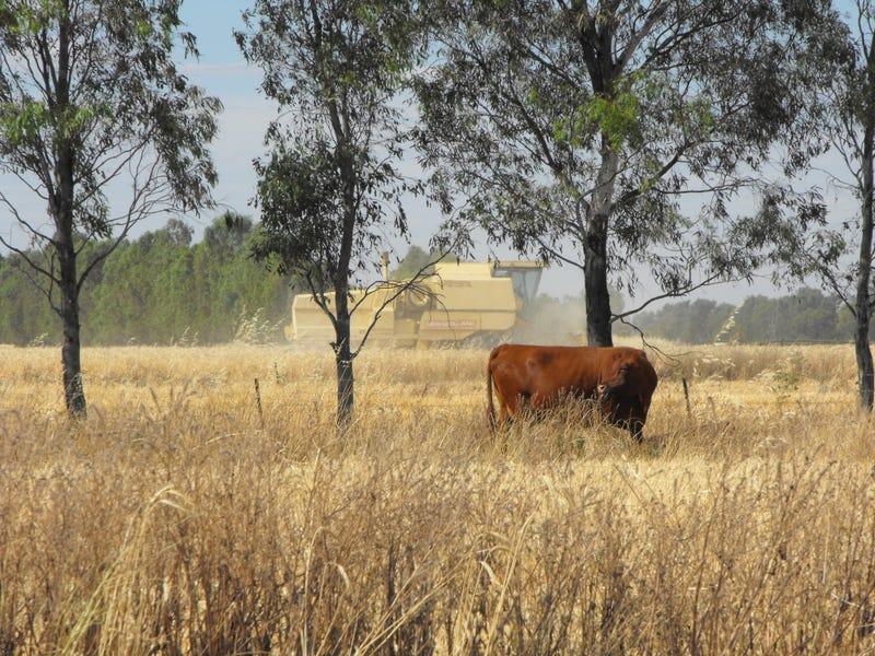 345 Campbells Road, Mayrung, NSW 2710