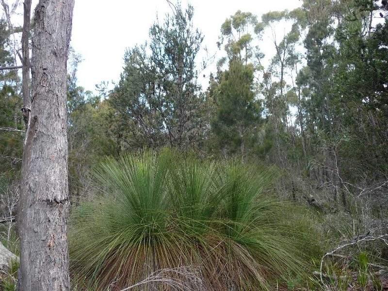 MG8 Forestry Road, Avoca, Tas 7213