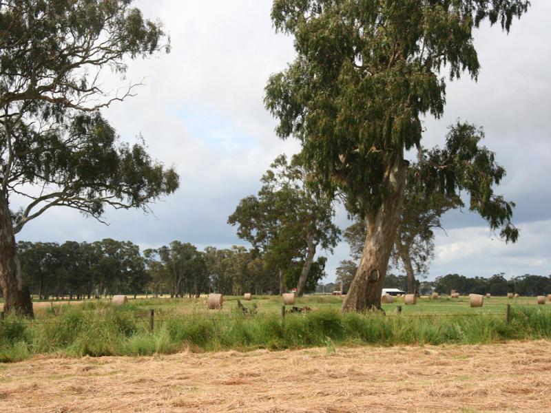 Lowson, Kalangadoo, SA 5278