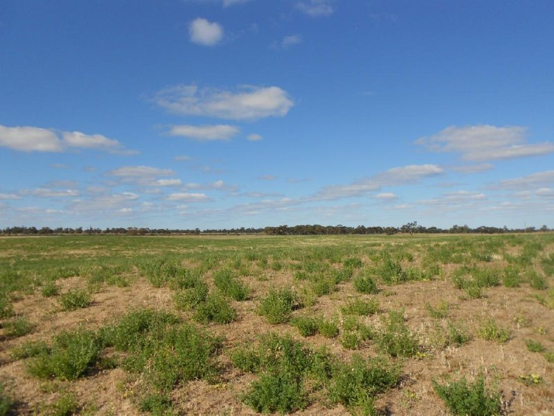 Lot 10 Dukes Highway, Tintinara, SA 5266