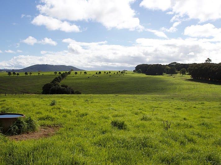 565 Old Coast Road, Dorrigo, NSW 2453