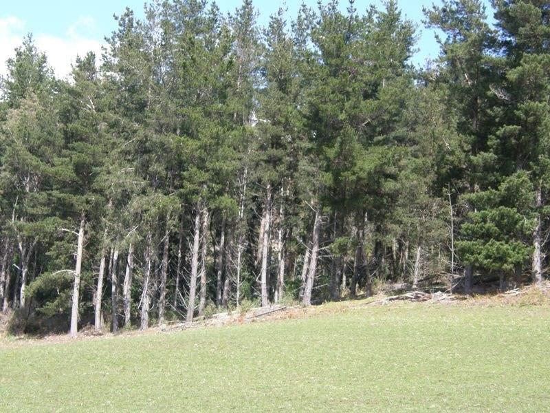 33808 Tasman Highway, Tulendeena, Tas 7260
