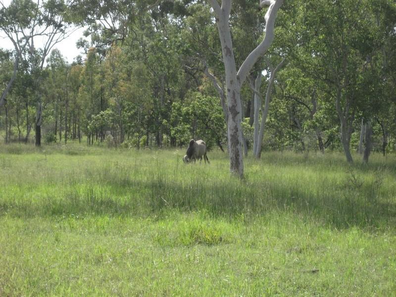 Lot 10 Old Coach Road, Majors Creek, Qld 4816