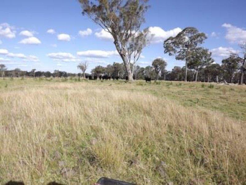 319, Torrington Rd, Stannum, NSW 2371