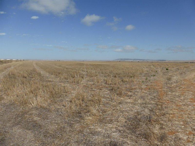 81 Wheat Road, Balaklava, SA 5461