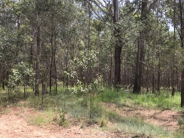 Lot 2 Clearfield Road, Myrtle Creek, NSW 2469