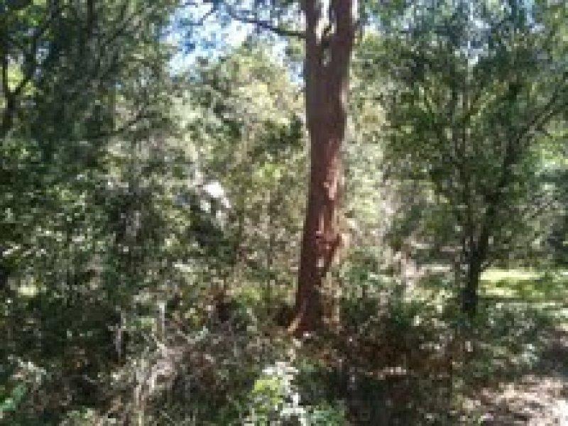 23 Cornelian Road, Pearl Beach, NSW 2256