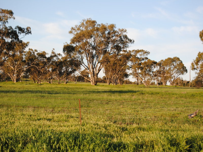 Pt Farm 86 Hulong Road, Widgelli, NSW 2680