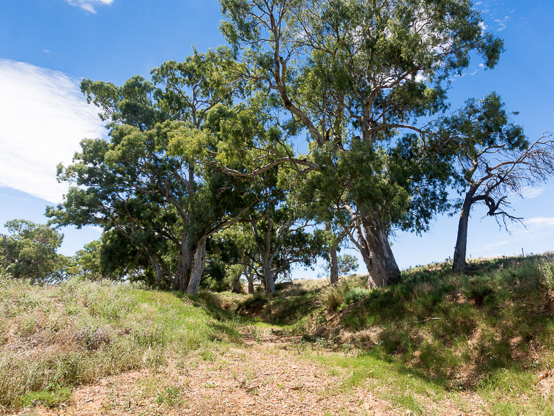 2284 Ridley Road, Angas Valley, SA 5238