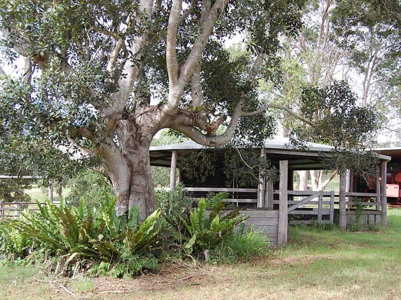 229 Theresa Creek Road, Theresa Creek, NSW 2469