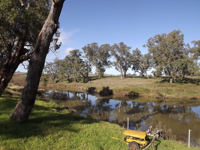 Billabong Binnaway Road, Coonabarabran, NSW 2357