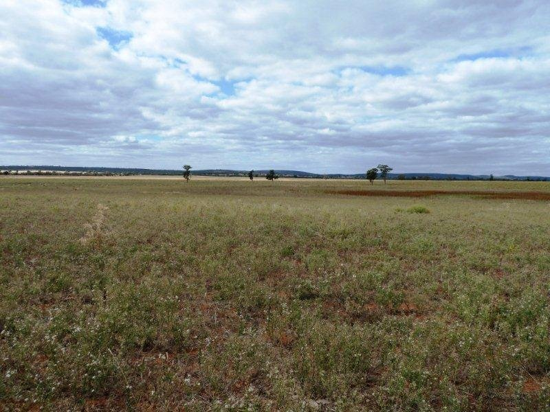 . Boorga and New Farms Roads, Nericon, NSW 2680