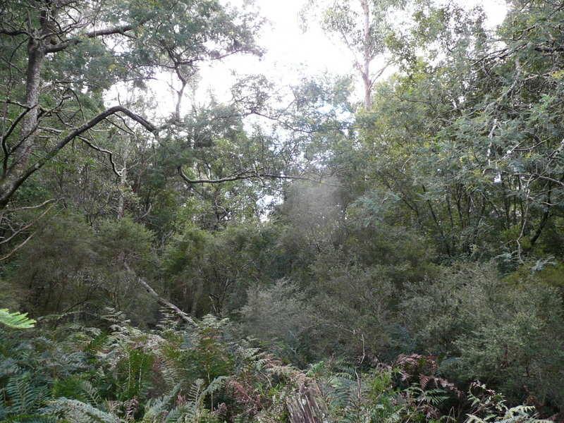 Top Road, Blackwood Creek, Tas 7301