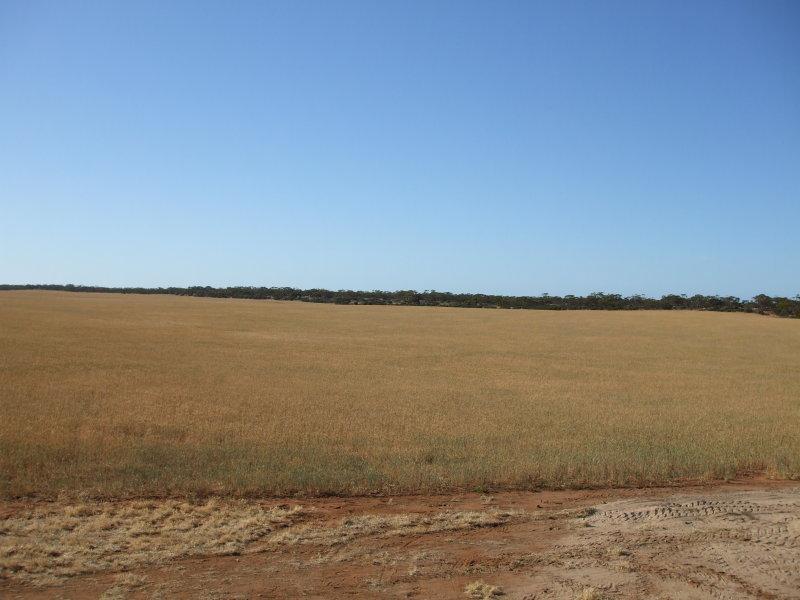 Schaefer's - Pinkawillinie, Kimba, SA 5641