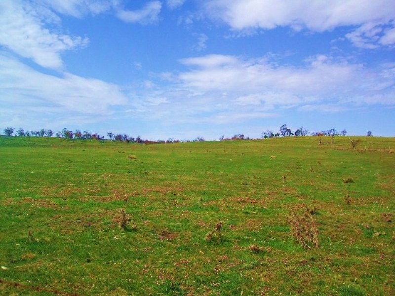 Ryedale Road, Nimmitabel, NSW 2631