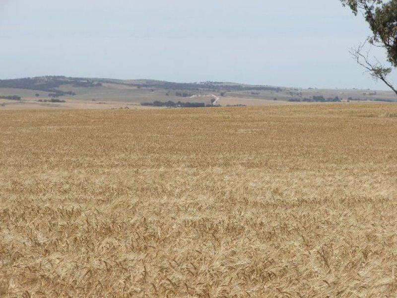 Bowmans Road, Yacka, SA 5470