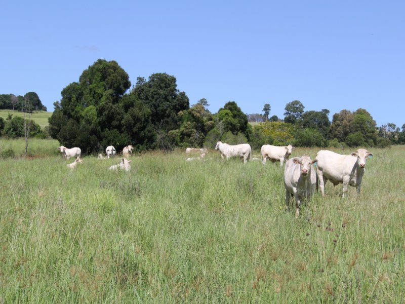 lot 79 corndale road, Corndale, Qld 4610