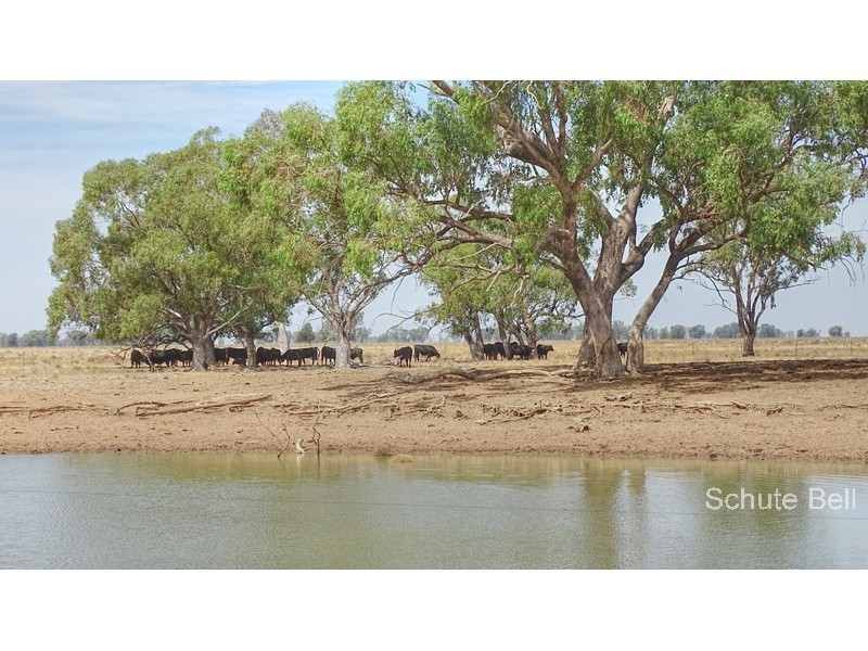 Address available on request, Trangie, NSW 2823