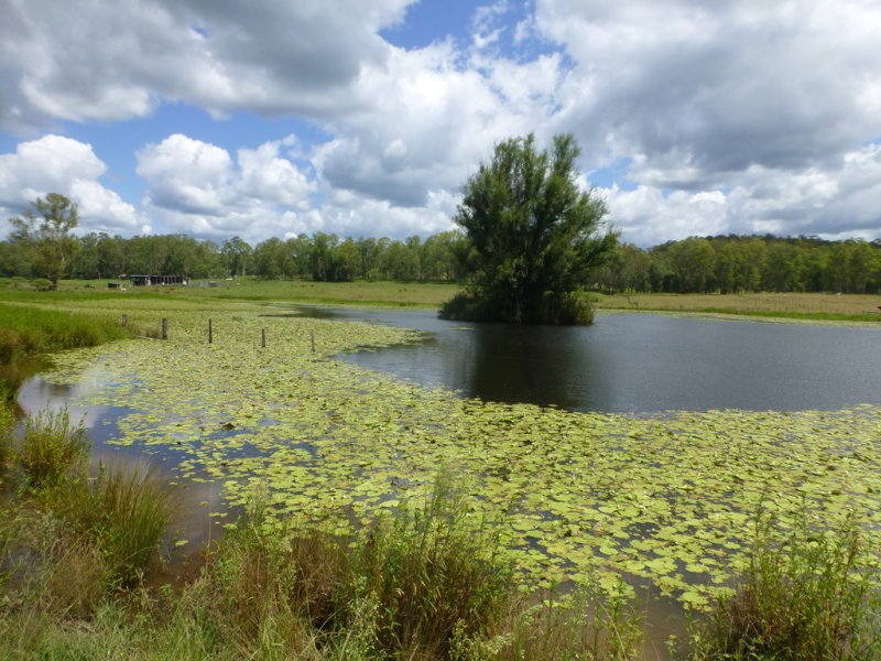LOT 144 Old Lawrence Road DEEP CREEK, Mallanganee, NSW 2469