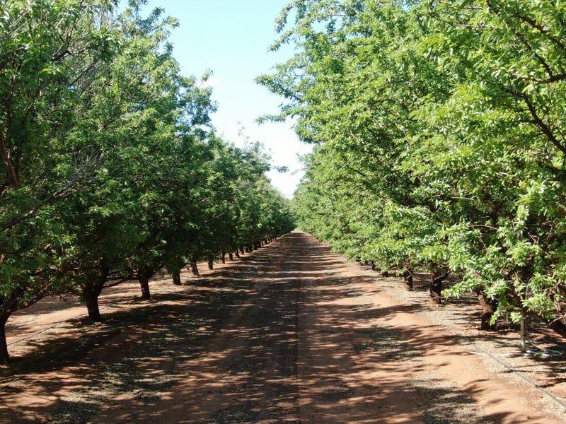 Farm 476 West Road, Griffith, NSW 2680