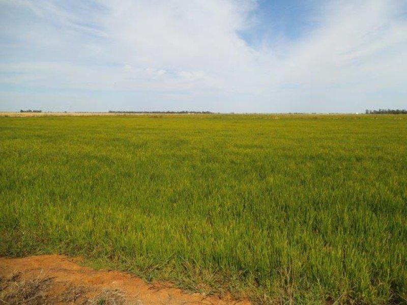 . Farm 565 & 567, Coleambally, NSW 2707