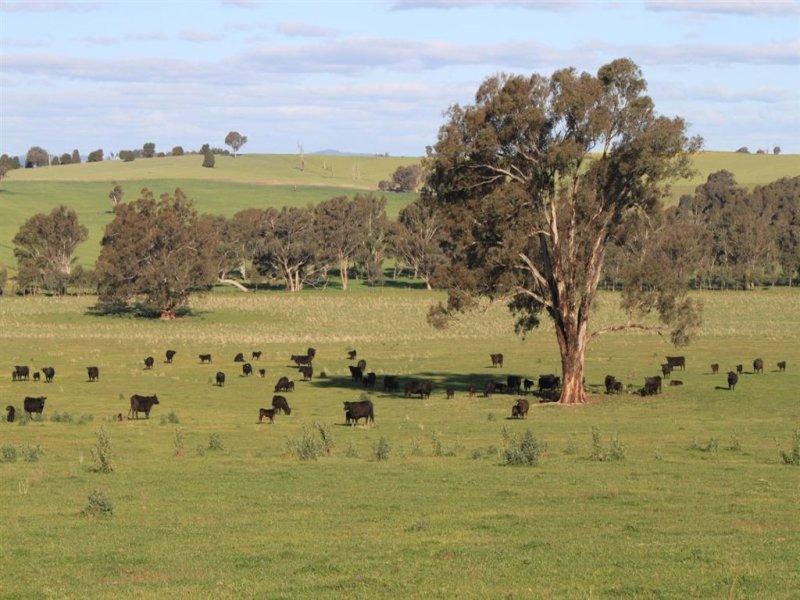 57 Henty Road, Mangoplah, NSW 2652