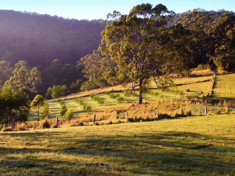 Sommervilles Road, Lorne, NSW 2439