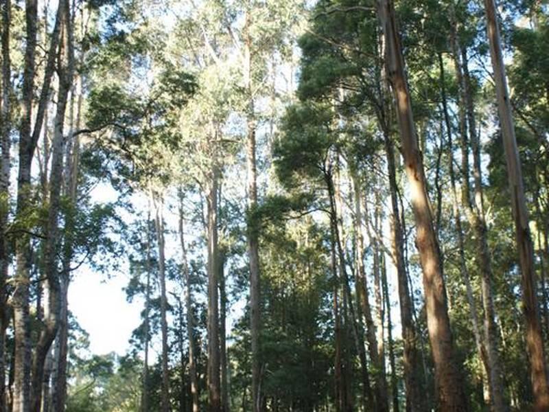 Tierneys Road, Mengha, Tas 7330