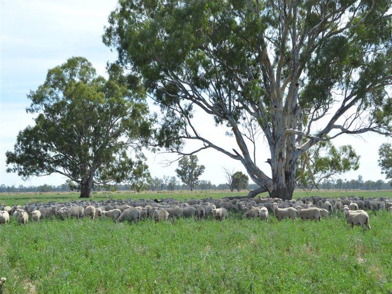 Penally 1791 Paintings Bridge Rd, Narrandera, NSW 2700