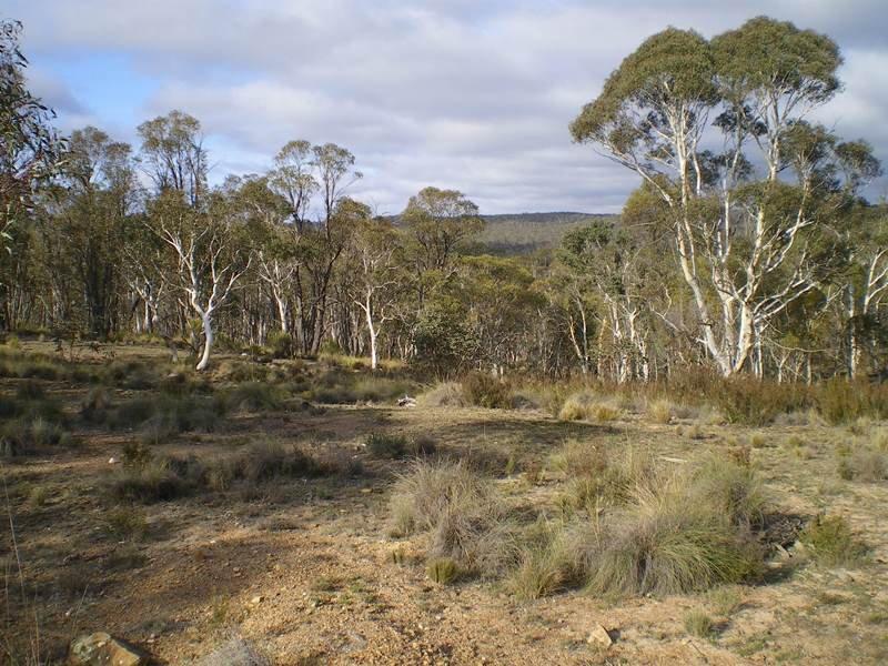 76, Mount Macanally, Peak View, NSW 2630