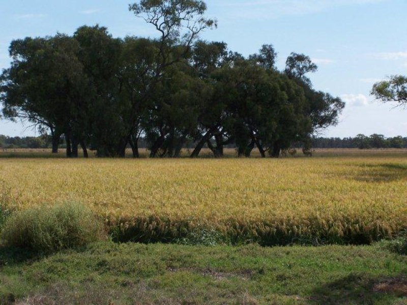 . Farm 20, Coleambally, NSW 2707
