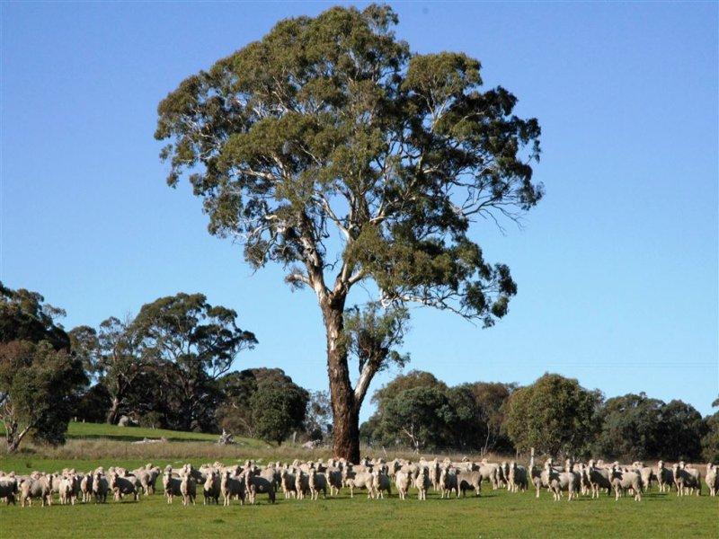 . Grabben Gullen Road, Gunning, NSW 2581