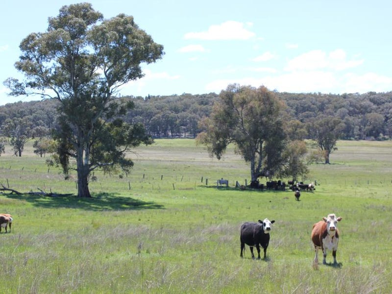 Rural/Residential Landholdings, Dunedoo, NSW 2844