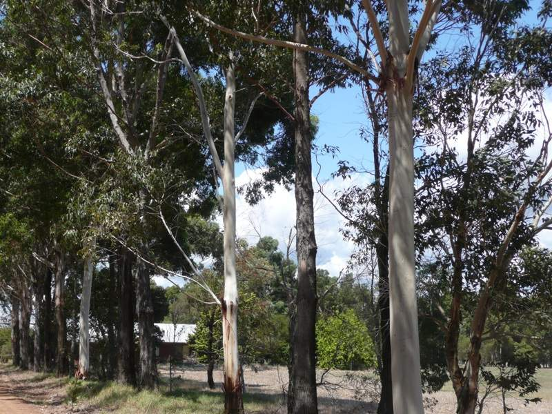 Address available on request, Yoongarillup, WA 6280