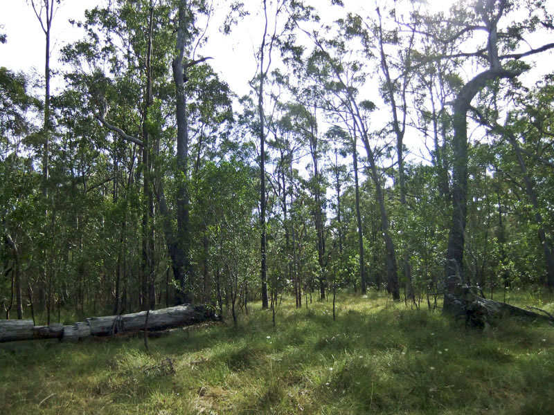 Lot 1 of DP 751372 Sh, Gulmarrad, NSW 2463