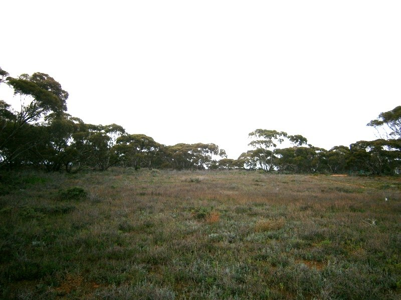 Lot 1 Morgan Road, Overland Corner, SA 5330