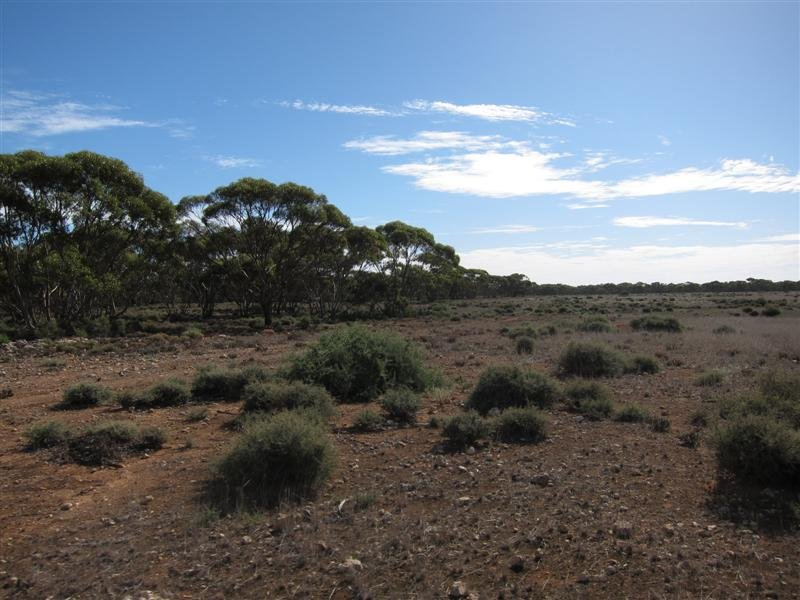 Lot 267 Linkes Woolshed Rd, Steinfeld, SA 5356